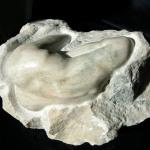 VENUS (Marmor)